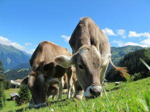 Zwierzęta gospodarskie - jakie są hodowane?