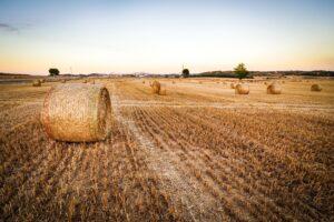 Typy rolnictwa - jakie są wyrózniane?